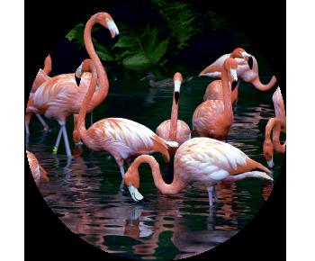 На запасное колесо фламинго 2