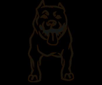 Собака стаффордширский терьер