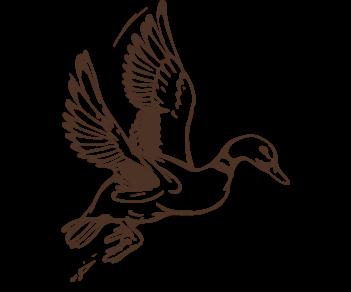 Летящая утка 3