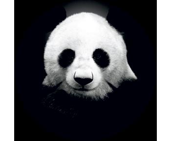 На запасное колесо панда