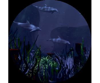 На запаску дельфины