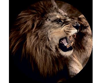 На запасное колесо лев 3