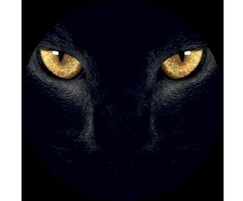 На запаску кот глаза