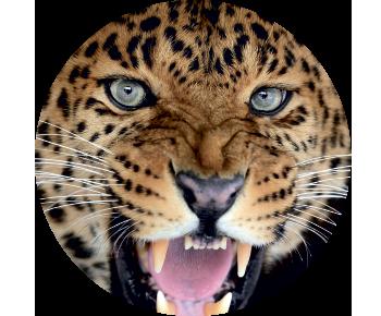 На запаску леопард 2