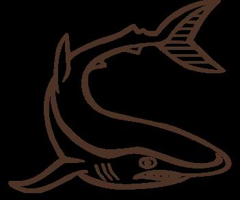 Акула 10