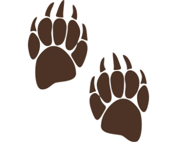 Лапа медведя след