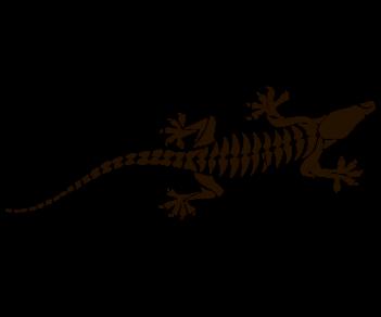 Дракон 49