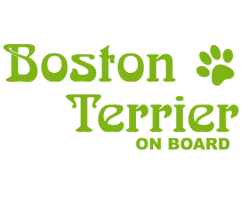 Бостон-терьер в машине
