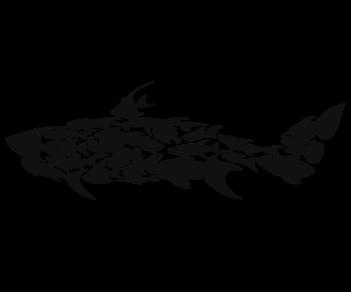 Акула-рыбки