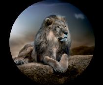 На запасное колесо лев 2
