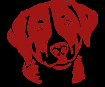 Собака Швейцарский Зенненхунд