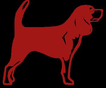 Бигль собака