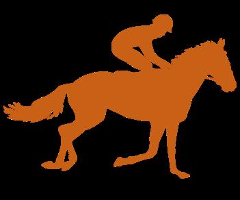 Конный спорт наездник