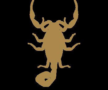 Жук скорпион