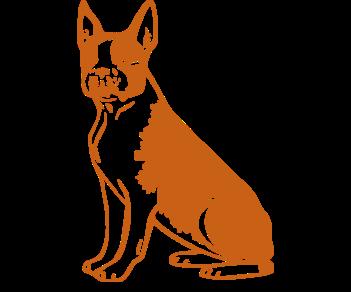 Бостон терьер собака