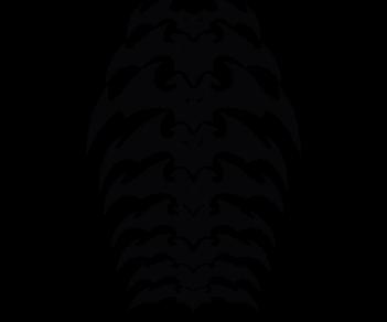 Хребет из летучих мышей