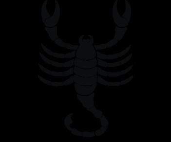 Скорпион 14