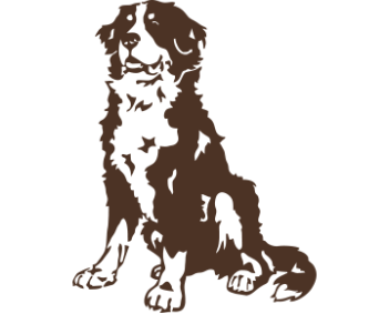 Бернский зенненхунд-собака