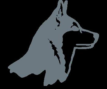 Собака хаски 2