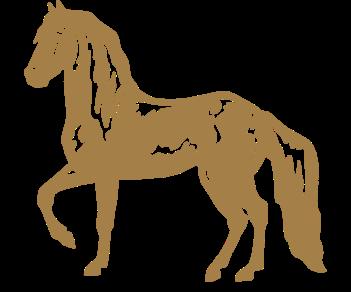 Иноходец лошадь