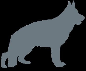 Овчарка собака 2