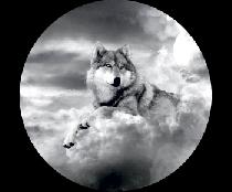 На запасное колесо волк