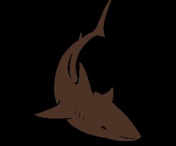Акула плывет