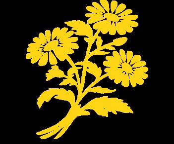 Букет цветов ромашки