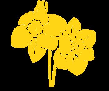Нарциссы 2