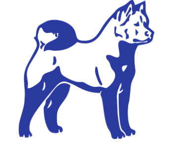 Акита собака 3