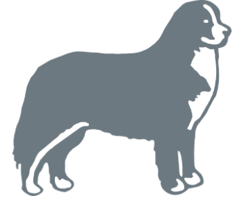 Собака Зенненхунд швейцарский