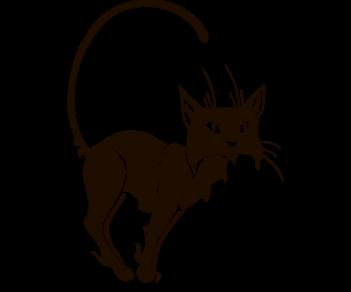 Cat 44