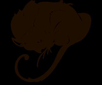 Cat 16