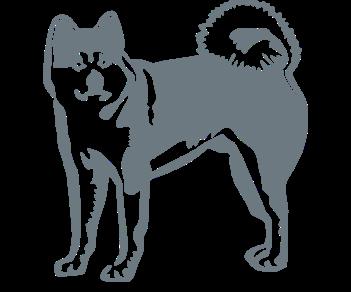 Собака акита