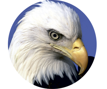 На запаску орел