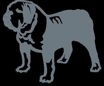 Бульдог собака