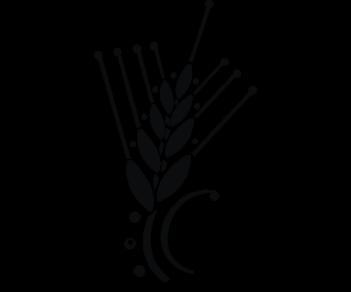 Стебель пшеницы