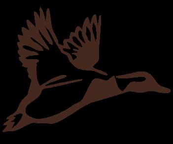 Утка летит