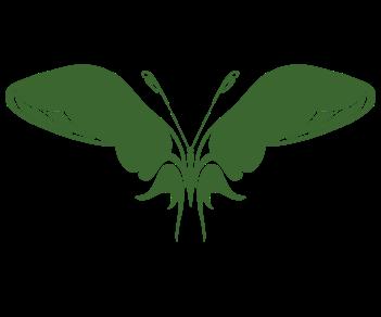 Бабочка 15