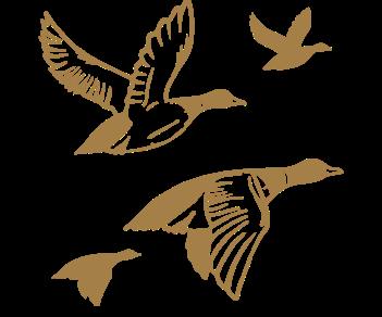 Утки в полете