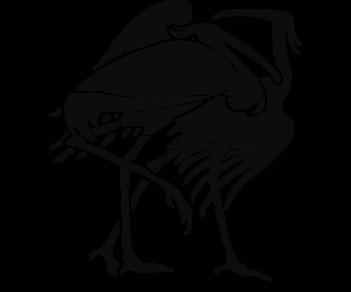 Птицы Цапли