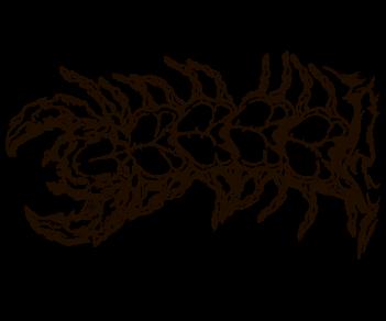 bio наклейка сколопендра fase