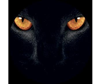 На запасное колесо кошка 5