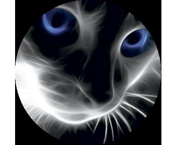 На запаску кот
