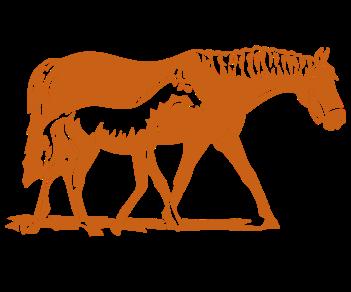Лошадь и жеребенок 2