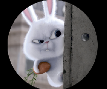 На запаску кролик
