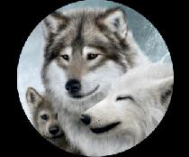 На запаску волки семья
