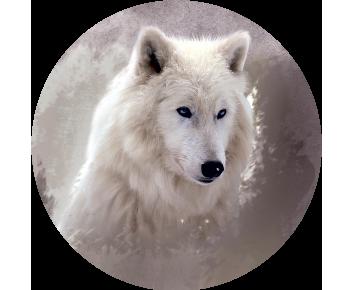 На запасное колесо волчица