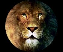 На запасное колесо лев