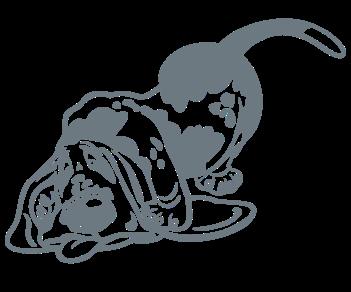Бассет хаунд собака